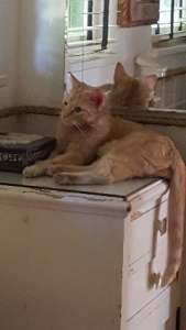 """Photo of Tyler's Shelter Rescue Cat, """"Sonny Cool Cat"""" in his forever home"""